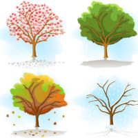 different seasons trees